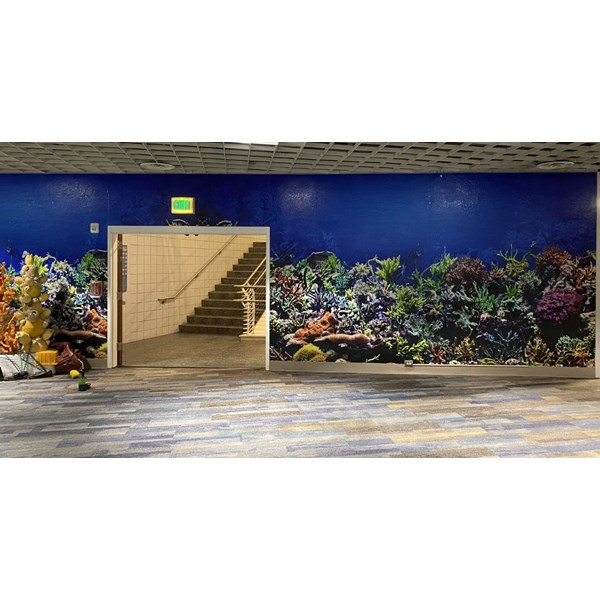 Tampa FL Aquarium Wall Graphics, Murals, Wallpaper